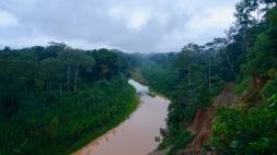 Dschungel - 29