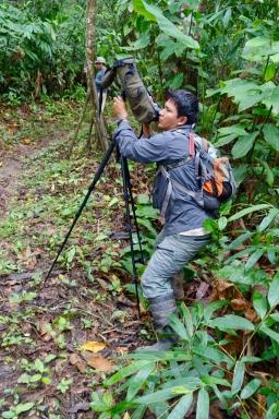 Dschungel - 32