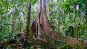 Dschungel - 39