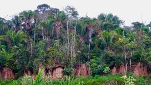 Dschungel - 46