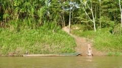 Dschungel - 5