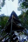 Dschungel - 50
