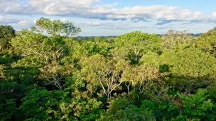 Dschungel - 55