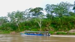Dschungel - 7