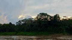Dschungel - 8