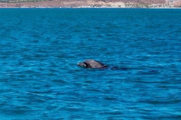 Tour zu den Walhaien
